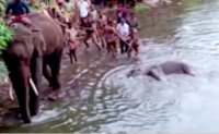 Elephant dies in India after eating explosive fruit trap