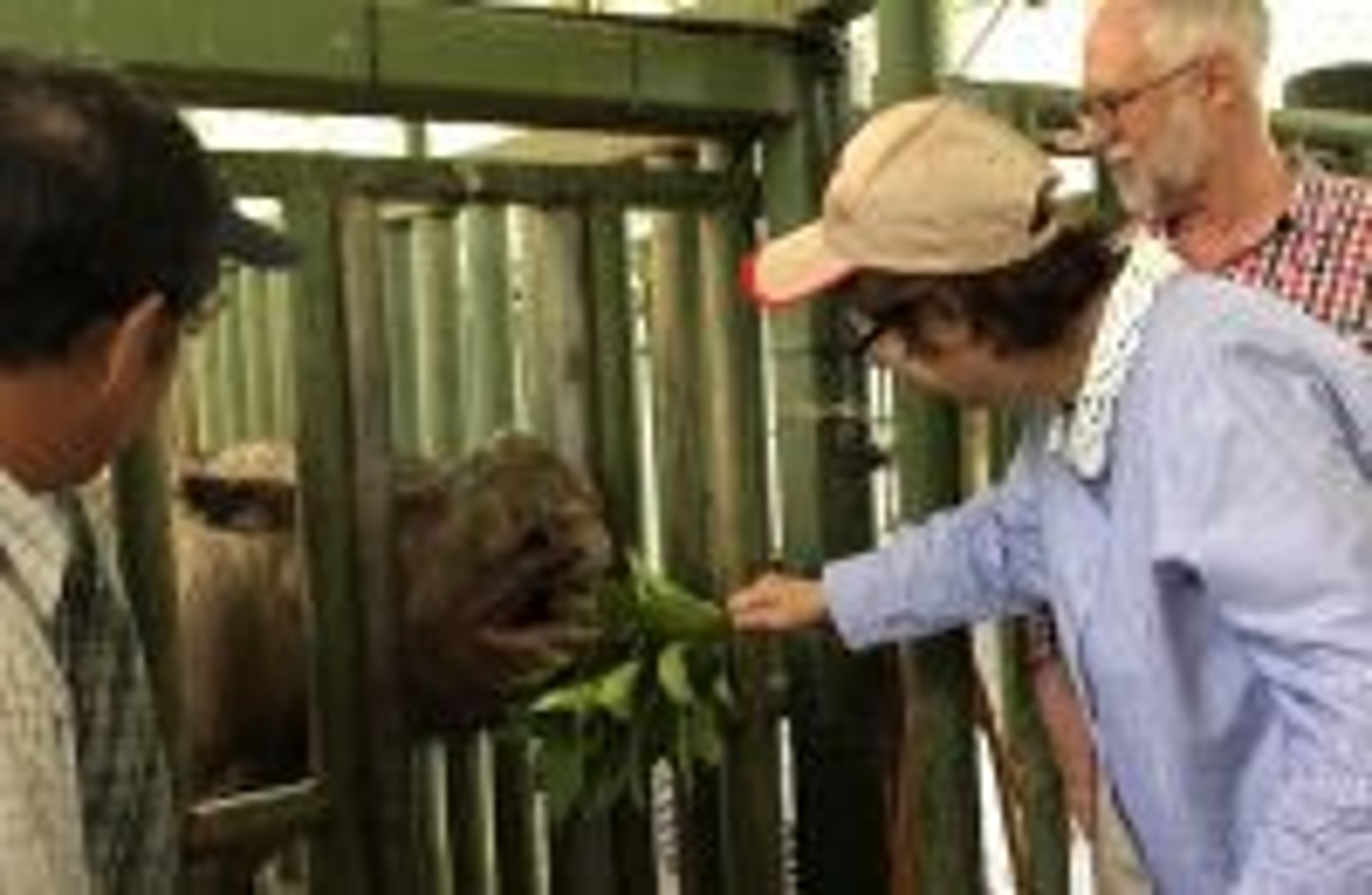 Sumatran rhino is extinct in Malaysia as lone survivor dies