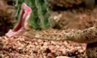 Snake venom: healing medicine & toxic menace