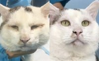 Stray cat China's online star after 'double eyelid' surgery