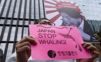 Rally's cry: 'Japan! No Whaling' [PHOTOS]