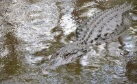 Woman killed by alligator in South Carolina