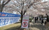 Koreans go for video tours, drive-thru viewing, flower delivery to savor spring blossoms amid pandemic