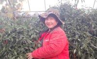 Thai resident's farming business brings diverse flavors to Korea