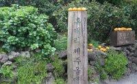A tale of Jeju citrus
