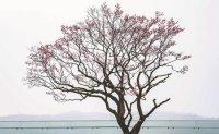 Everland unveils plum blossom trail