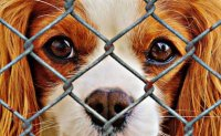 Calls grow for stronger punishment against animal abusers
