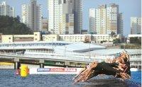 Brazilian Cunha wins women's 5K open water at world titles