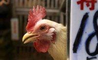 Bird flu hits third of Guangzhou poultry markets