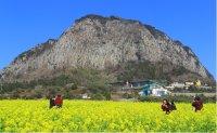 Jeju is losing luster as tourist destination