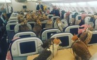 Saudi prince buys plane tickets for his 80 hawks
