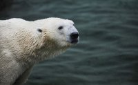 Only remaining polar bear in South Korea dies