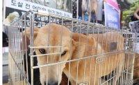 Poll shows Koreans evenly divided over legal ban on dog slaughter