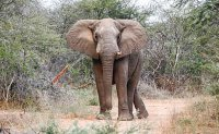 German tourist trampled to death by elephants in Zimbabwe