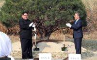 'Tree of Peace' planted at Panmunjeom