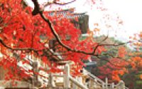 Book explores 30 wonders of Korean Buddhism