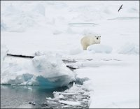 UK Leads Steps to Fight Climate Change