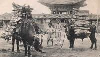 Did you know that… (25) Greed propelled deforestation in 19C Korea