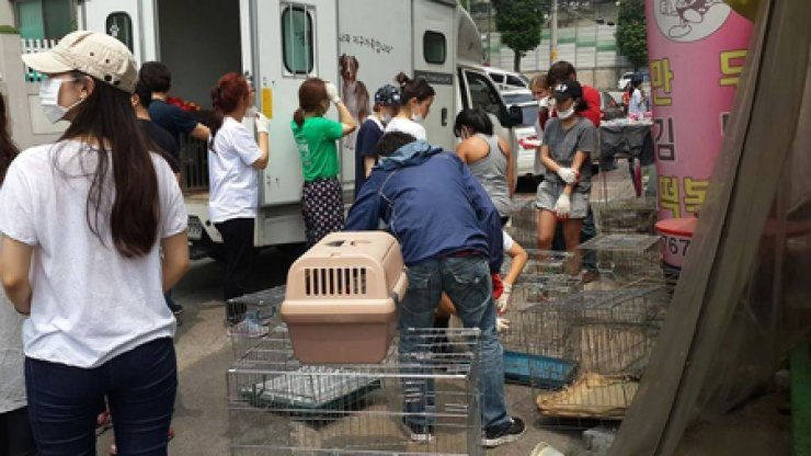 Volunteers prepare cages to rescue dogs from a hoarding situation in Gwangju, Gyeonggi Province, in July. / Courtesy of Cody Yoshizawa