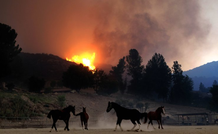 Horses are spooked as the Woolsey Fire moves through the property on Cornell Road near Paramount Ranch on November 9, 2018 inAgoura Hills, California. AFP