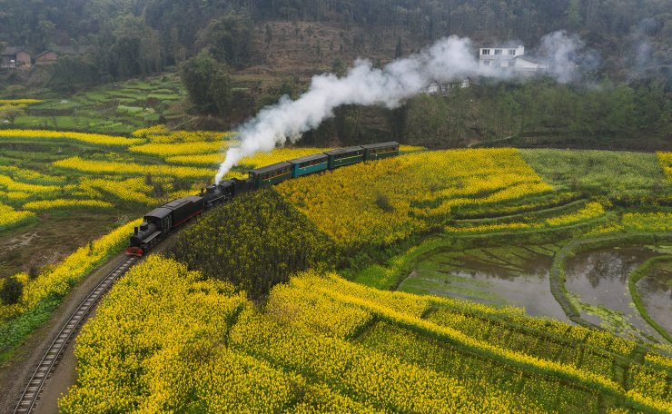 A Jiayang steam train runs on a narrow gauge railway in cole flower fields in Qianwei County, southwest China's Sichuan Province, March 20, 2019. The old-fashioned steam train, running on a narrow gauge railway in Qianwei County, serves mainly in sightseeing, but as increasing number of tourists visit the county in recent years, the train itself has become an attraction providing a journey of reminiscence. Xinhua