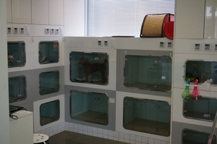 Pet dogs are inside kennels at a pet hotel in Songpa-gu, southeastern Seoul, Friday. / Korea Times photo by Baek Byung-yeul