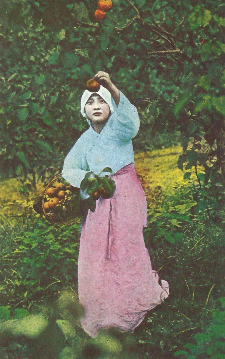 Fruit picking circa 1920-1930