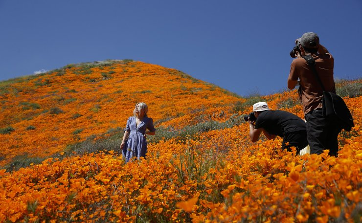 A model poses among wildflowers in bloom Monday, March 18, 2019, in Lake Elsinore, Calif. About 150,000 people flocked over the weekend to see this year's rain-fed flaming orange patches of poppies lighting up the hillsides near Lake Elsinores, about a 90-minute drive from either San Diego or Los Angeles. AP
