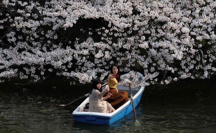 Visitors take pictures with cherry blossoms in the Japanese capital Tokyo on March 27, 2019. AFP