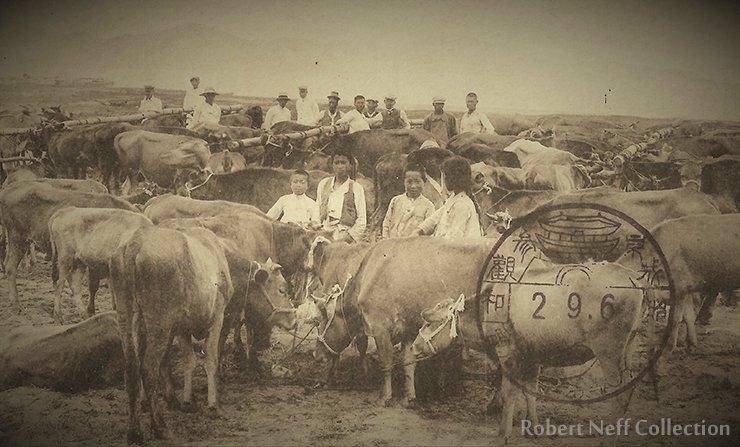 A cattle market, circa 1900s. Robert Neff Collection