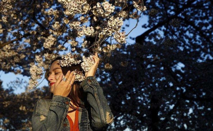Daniela Martinez Berrios of San Juan, Puerto Rico, embraces a branch on a cherry blossom tree along the Tidal Basin, Wednesday, April 3, 2019, in Washington. AP