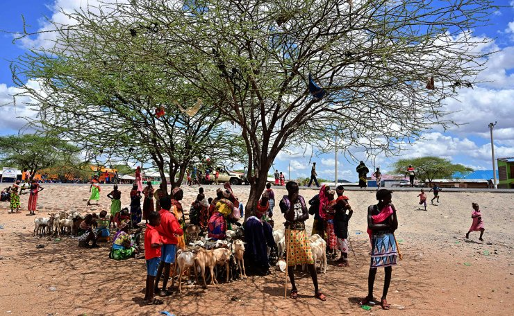 <span>Traditional Samburu tribes-people shelter in the shade of an acacia at Merille livestock market, some 411km north of Nairobi in Kenya's Marsabit county, on April 30, 2019. - Nomadic livestock herders in East Africa's drylands have endured climate variability for millennia, driving their relentless search for water and pasture in some of the world's most inhospitable terrain. AFP</span><br /><br />