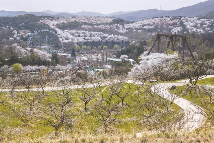 Everland will open the plum blossom trail Friday that will be the first of its kind in Seoul and its surrounding area. / Courtesy of Everland