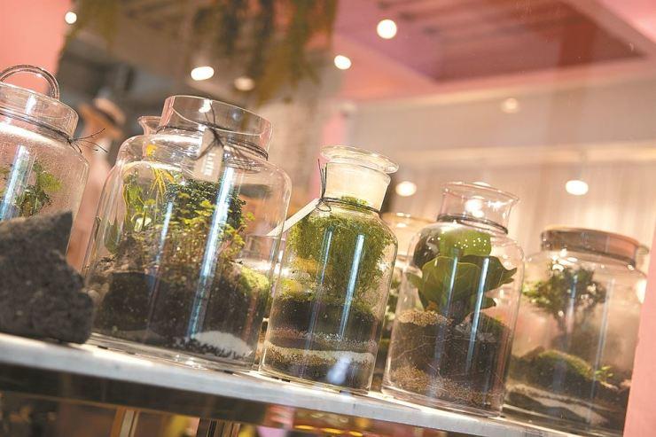 Various terrariums are displayed at La Fete. Korea Times photo by Choi Won-suk