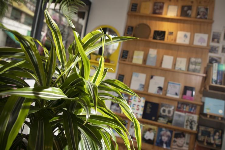 Plants and books coexist at Daeruk Books. Korea Times photo by Choi Won-suk