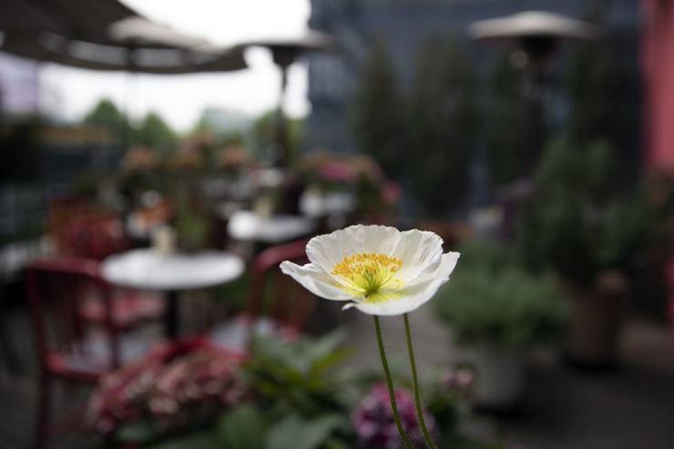 A Terrace at La Fete. Korea Times photo by Choi Won-suk