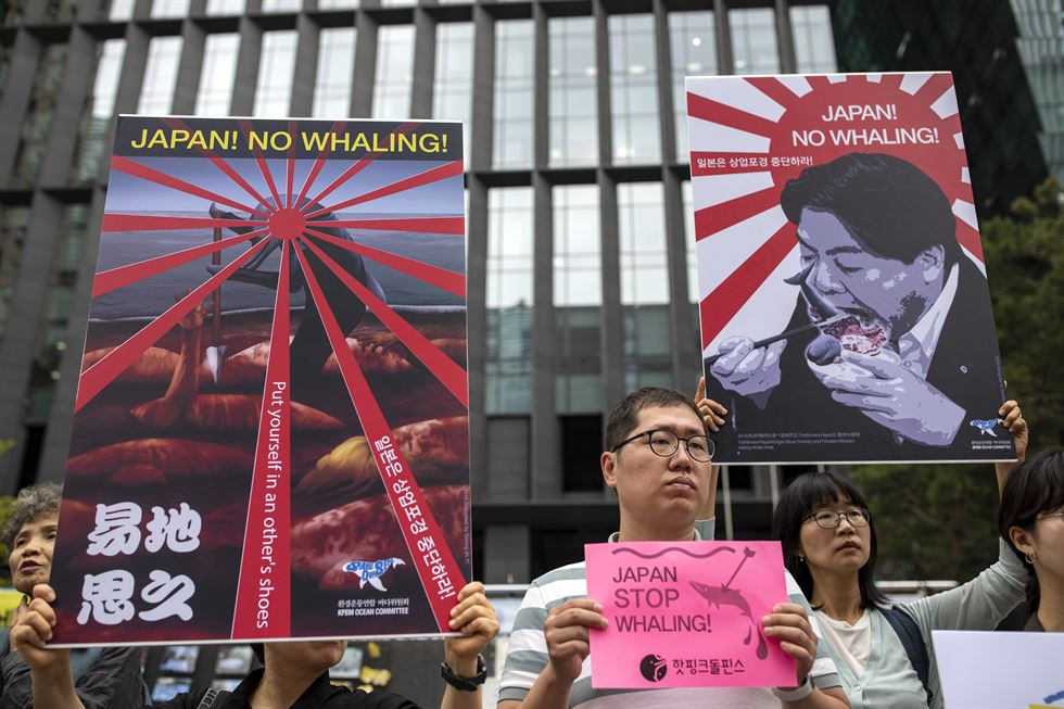 An anti-whaling campaigner holds a placard at a street rally in central Seoul, Wednesday. The rally, organized by seven local environmental organizations, took place before Japan's resumption of commercial whaling on July 1, following a three-decade hiatus. Japan withdrew from the International Whaling Commission in December to resume commercial whaling despite international criticism. According to Japanese media, a whaling fleet of five vessels will leave Hokkaido on July 1. Korea Times photo by Shim Hyun-chul