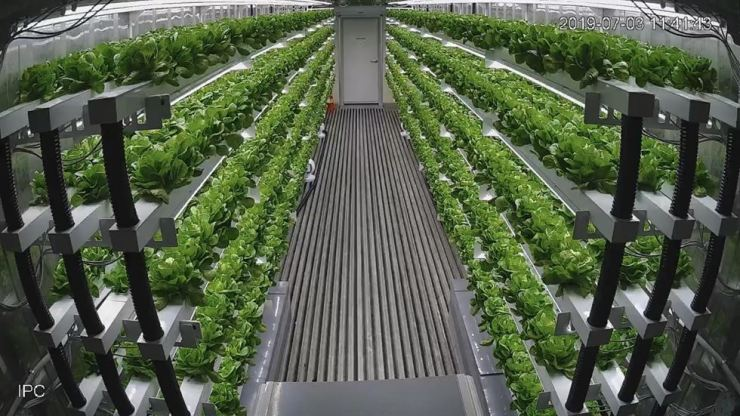 Inside Planty Cube, the isolated environment's temperature, humidity and disease elements can be remotely controlled from outside. Courtesy of n.thing