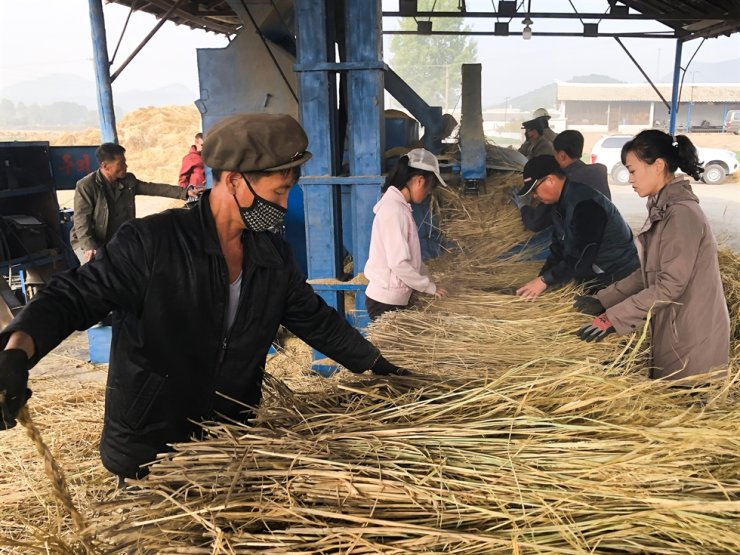 Employees harvest grain at the Koh Chang cooperative farm near Pyongyang, Oct. 17, 2019. The farm has over 1.500 employees, and supplies agricultural products to the Chollima Steel Complex, one of North Korea's largest steel plants, as well as Pyongyang's grocery stores. TASS-Yonhap