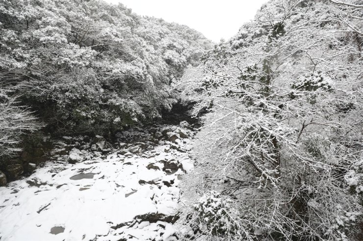 Snow blankets the Sooak Valley at Mount Halla on Jeju Island, Tuesday. Yonhap