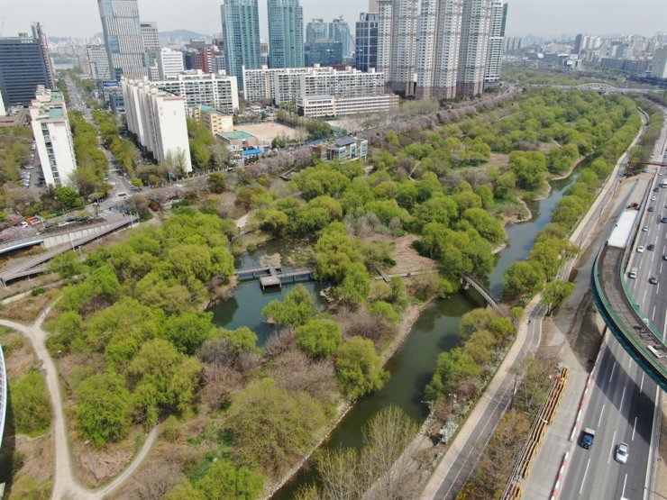 A drone shot of Yeouido Saetgang Ecology Park in Seoul's Yeongdeungpo district. The park's preservation is managed by the non-governmental social cooperative HANgang, established in August 2018. Courtesy of HANgang