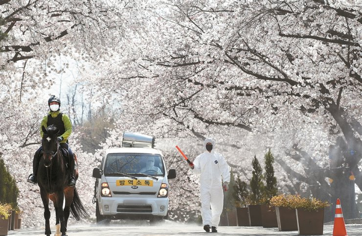 Korea Racing Authority (KRA) officials disinfect the LetsRun Park Seoul in Gwacheon, Gyeonggi Province, where cherry trees are in bloom, Sunday, while a rider trains a horse. The KRA closed the park and canceled this year's cherry blossom festival due to the COVID-19 pandemic. / Yonhap