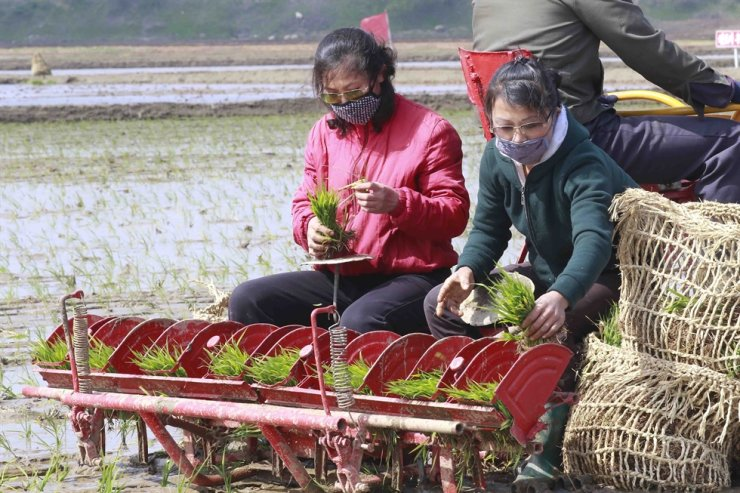 Farmers on the Chongsan-ri cooperative farm start planting rice for this year on Tuesday, May 12, 2020, in Nampho, North Korea. AP
