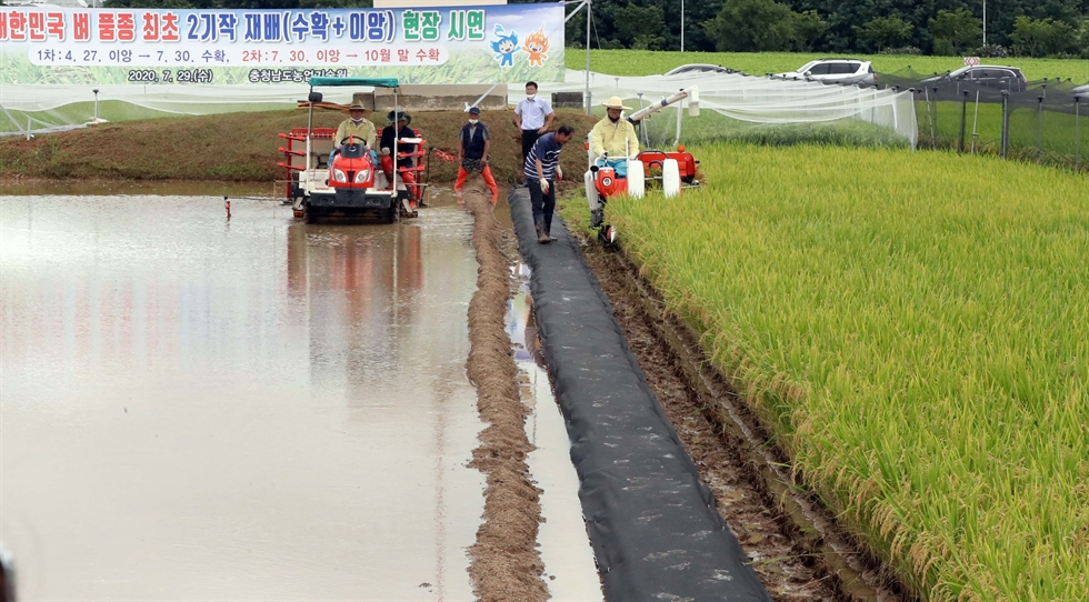 Rice from a paddy in the Jookdong-dong area of Busan's Gangseo District is harvested. Korea Times file