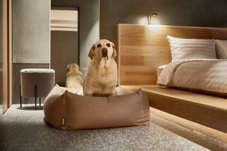 A dog sits in a dog bed at a guest room of Vivaldi Park in Hongcheon, Gangwon Province. / Courtesy of Booking.com
