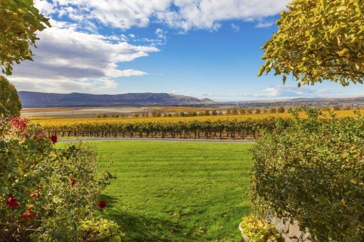 Vineyard in Washington State / Courtesy of Brand USA