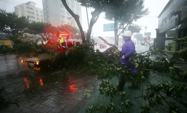 City officials on Jeju Island remove branches torn from trees by Typhoon Maysak, Wednesday. The ninth typhoon of the season was forecast to arrive over waters southwest of Busan around midnight and move northward to the country's eastern coastal regions. In addition to Maysak, the nation is expected to come under the influence of Typhoon Haishen as it moves northward from waters northwest of Guam, according to the Korea Meteorological Administration. / Yonhap