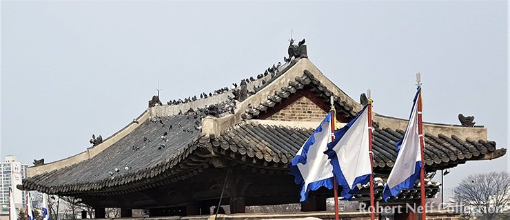 Pigeons at Suwon's fortress in February 2016. Robert Neff Collection