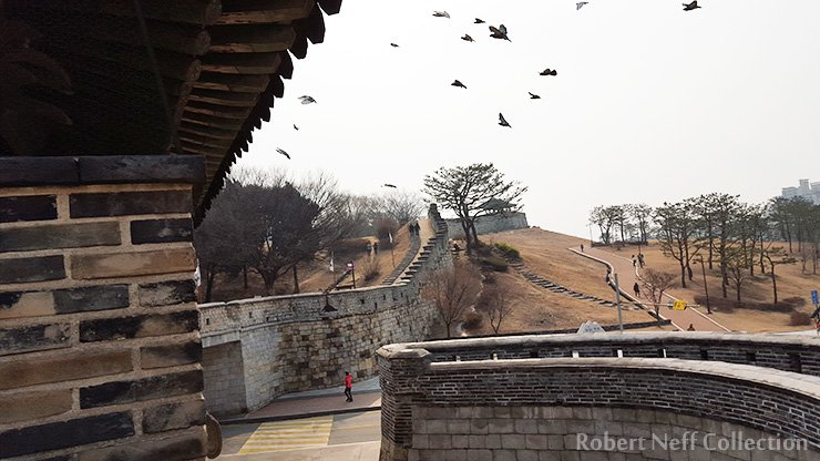 Pigeons in flight at Suwon in February 2016. Robert Neff Collection