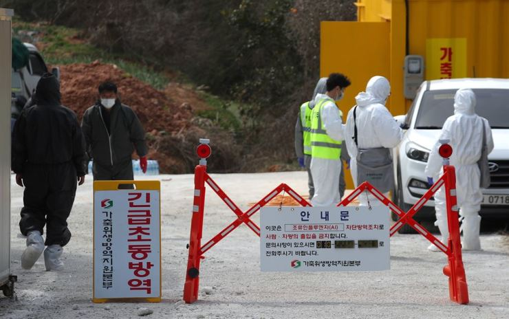 Health officials prepare to cull chickens at a farm in Naju, South Jeolla Province, Thursday, where a H5N8 strain of avian influenza pathogen was found. Yonhap